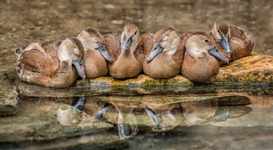 Birds on rock by lake