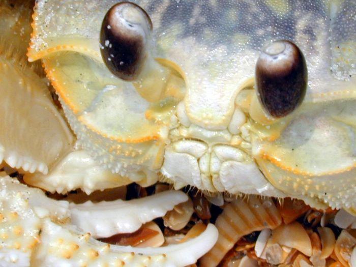 Beach Close-up CR Florida Ghost Crab Ice Cream Sandwiches Life Is A Beach Ocean Ponte Vedra Bea Sea Shells Seafood Selective Focus Shell Still Life Vilano Beach