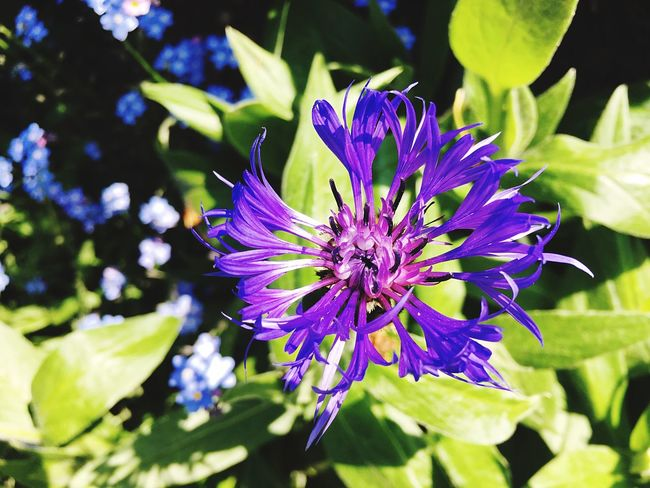 Flower Fragility Nature Petal Beauty In Nature Growth Freshness Plant No People Outdoors Purple Day Flower Head Close-up Leaf Blooming