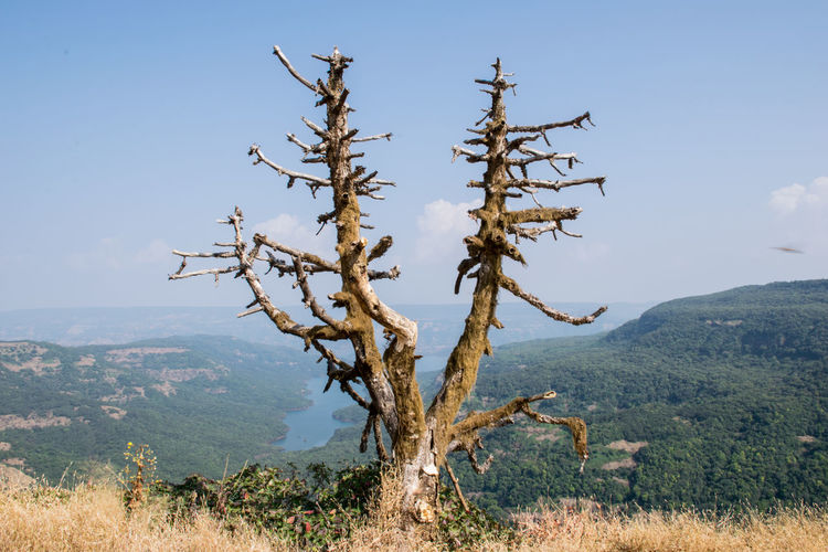 Dead Tree Dead Tree Dead Plant Dead Wood Lake Mountains Blue Sky Tree Dry Tree Tree Mountain Rural Scene Plant Part Agriculture Social Issues Sky Landscape Plant Plant Life