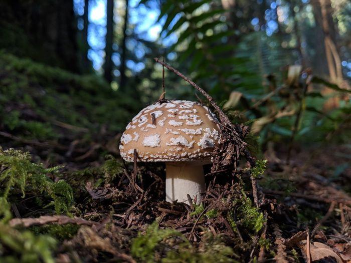Power up! Fly Agaric Mushroom Tree Close-up First Eyeem Photo