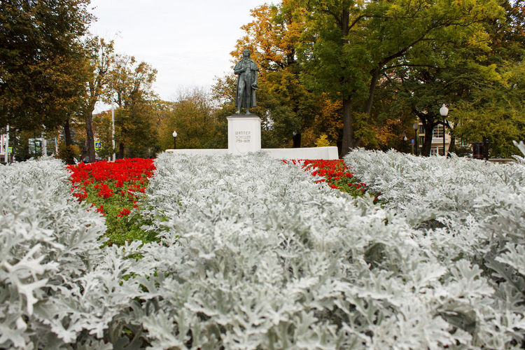 White flowering plants in cemetery