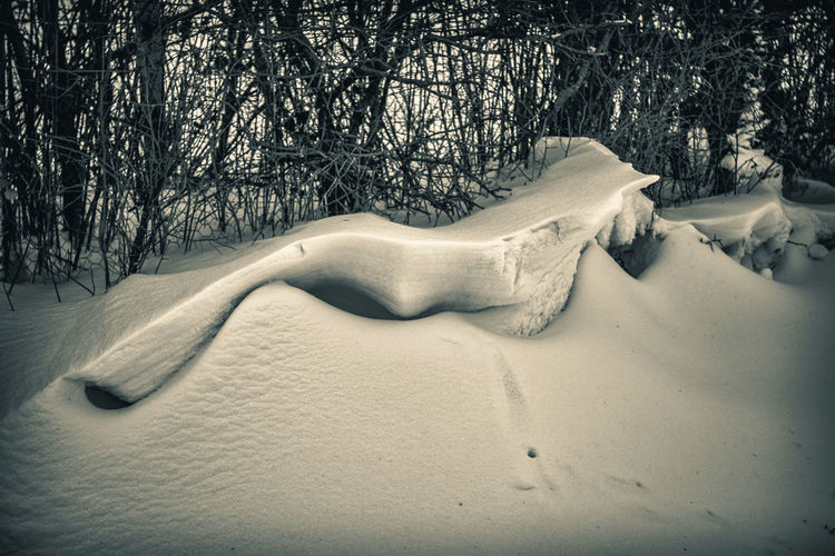 Snow dunes Bare Tree Beauty In Nature Cold Temperature Day Nature No People Outdoors Snow Tranquility Tree Winter