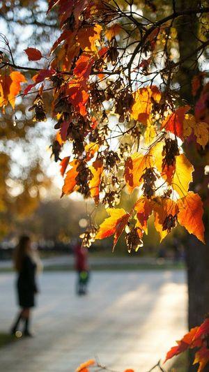 Так просто. Autumn Nature Autumn Colors осень Street