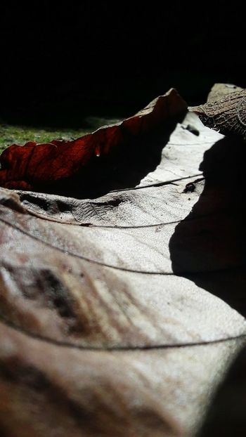 Every leaf speaks bliss to me! #closeupshot #leafs #rainforest Mountain Hiker