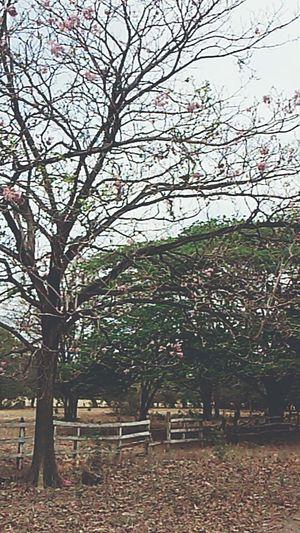 First Eyeem Photo Sky Flowers Nicaragua Rivas,nicaragua Vintage