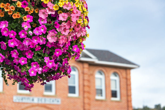 Colorful flowers in a hanging basket with an out of focus building in the background in Red Lodge, Montana Architecture Blue Brick Brick Building Colorful Flower Flowers Hanging Basket Montana Pink Red Lodge Red Lodge, Montana Sky Tourism Town Travel Travel Destinations USA Yellow