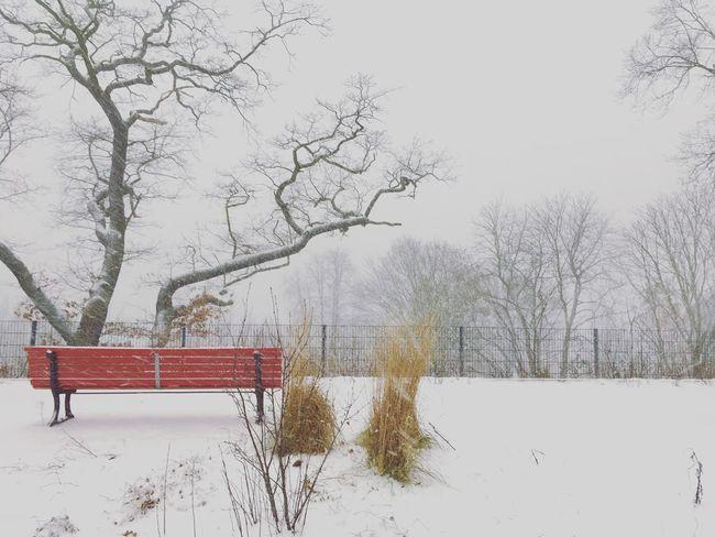 Redbench Winterwonderland Trough My Eyes Thoughts Inwinter EyeEm Best Shots Eyemphotography EyeEm Nature Lover Red Bench Wintertime Seasonofart TakeASeat