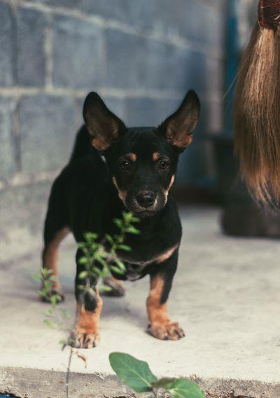 Domestic Pets Domestic Animals One Animal Mammal Dog Canine