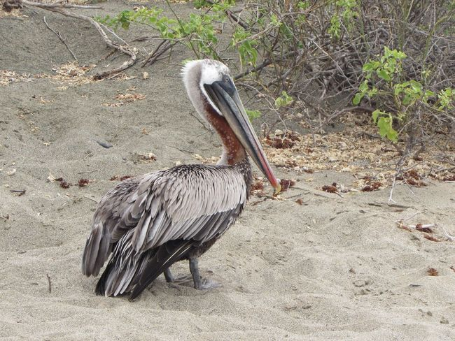 Bird One Animal Animal Themes Animals In The Wild Animal Wildlife Pelicans Day Beak No People Nature Outdoors Close-up