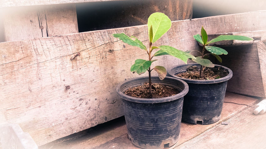 Day Growth No People Nature Sand Potted Plant Indoors  Plant Loei,thailand Close-up Flower Green Color Leaf