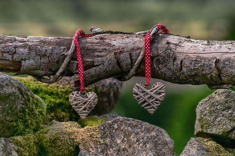 Close-up of wooden hearts tied on tree branch