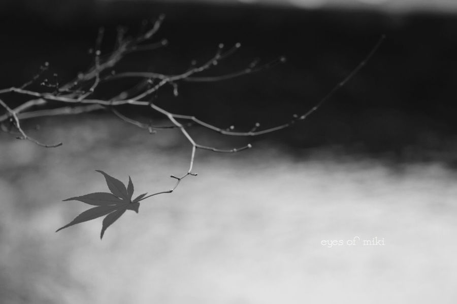 今日の雨と風で全て散ってしまっただろうか… Nature Blackandwhite Leaf Tokyo Autumn Park Japan Monochrome Eye Em Nature Lover 晩秋 Design Photo あえてモノクロで