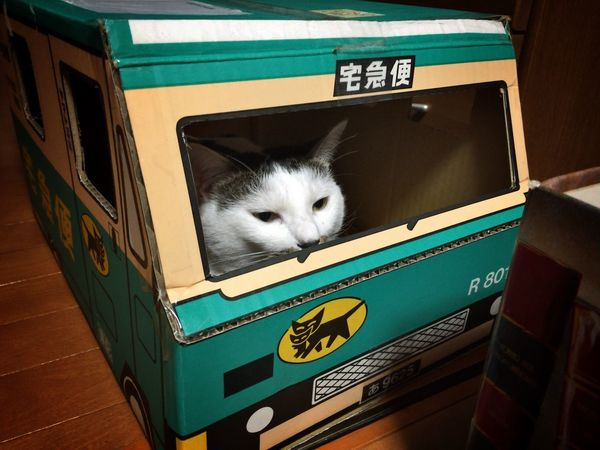 The cat driver. Cat Delivery Service