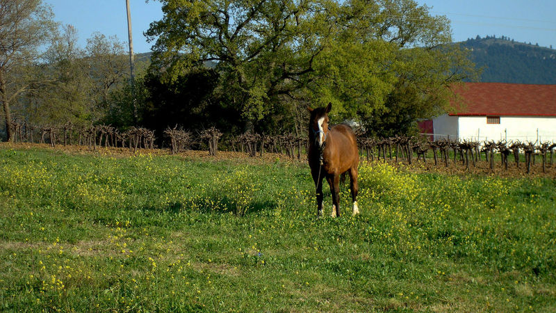 Animal Themes Day Field Grass Horse Horses Landscape Nature Outdoors