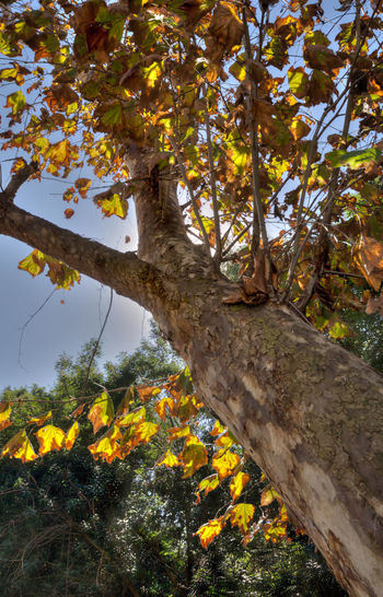Sun through leaves Abundance Beauty In Nature Blossom Botany Branch Day Flower Fragility Freshness Growing Growth In Bloom Low Angle View Multi Colored Nature No People Outdoors Scenics Single Tree Springtime Tranquility Tree Tree Trunk Vibrant Color Yellow