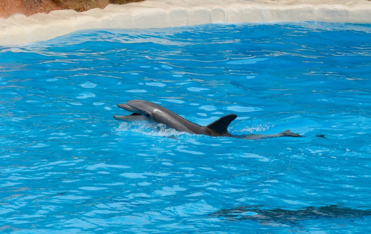 High Angle View Of Dolphins Swimming In Blue Pool