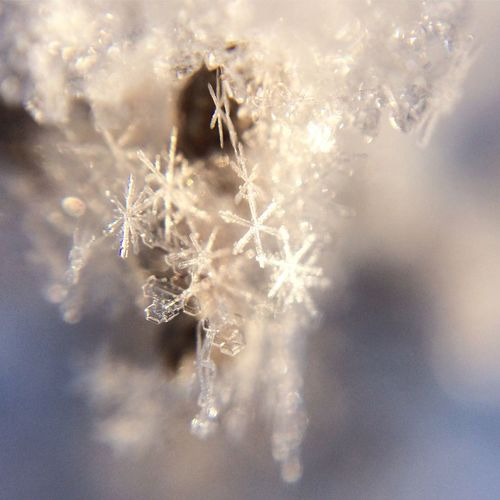 Close-up of snowflakes on frozen water