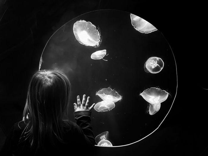Rear view of jelly fish swimming in aquarium