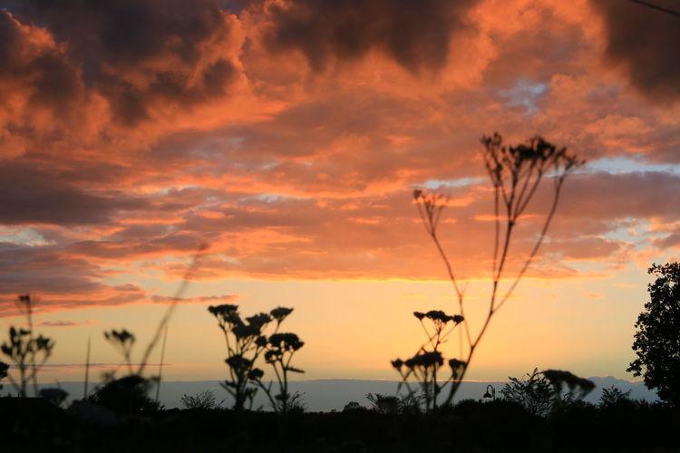 Silhouette plants against orange sky