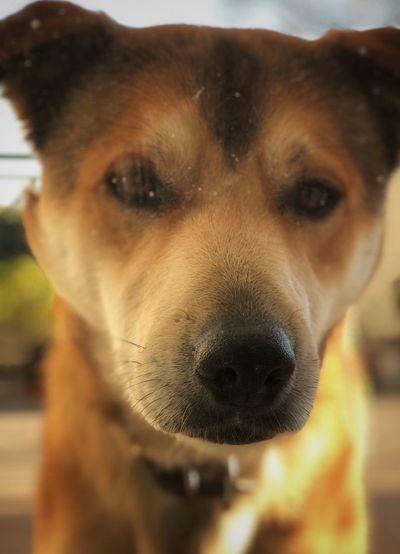 Skooby Dog