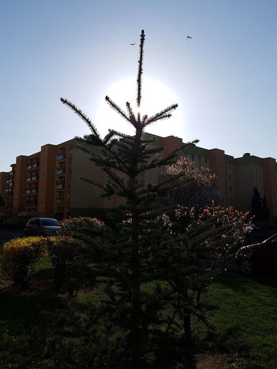 High sun in the city. Sunny spring Sun City Tree Spring April Bydgoszcz High Sun Sunny Day Water