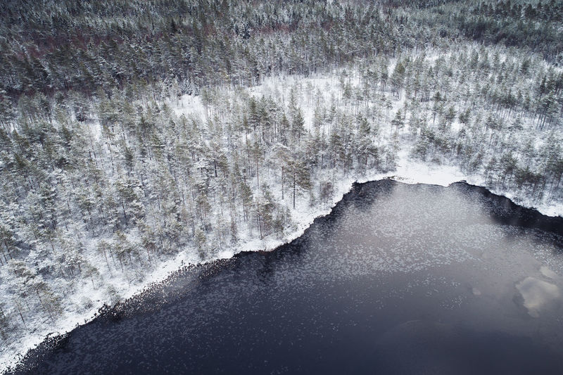 Aerial view of trees in forest by lake during winter