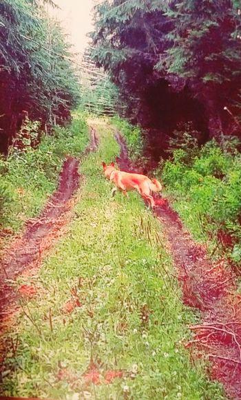Radical 🌻🌿 Growth Tranquility German Shepherd Husky Labrador Floppy Ears 💗 Running