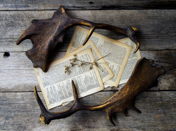 Animal Themes Antlers Countryside Flatlay Pages Pages Of A Book Rustic Still Life Still Life Photography Taxidermy Vintage Wood