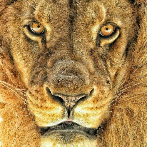 Be Lione Hello World Taking Photos Enjoying Life