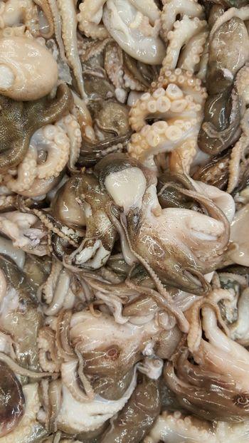 Seafood octopus oceanlife