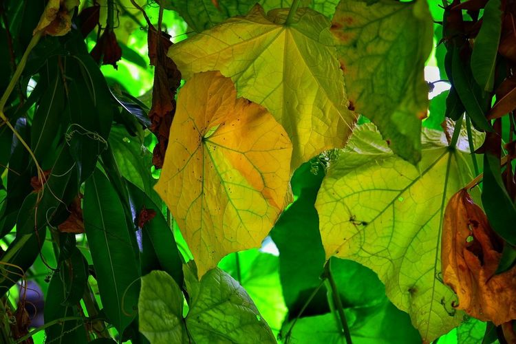 Leaf Autumn Nature Outdoors Green Color Growth Change Beauty In Nature Day No People Freshness Branch Multi Colored Close-up Tree Fragility