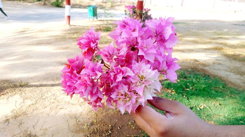 Plucked Shadesofpink College Life College Close-up Human Hand Flower Water Beach Pink Color Sand Close-up Grass Personal Perspective Blooming Cropped Human Finger Unrecognizable Person Flower Head Low Section In Bloom Pollen Petal Plant Life Growing Visual Creativity