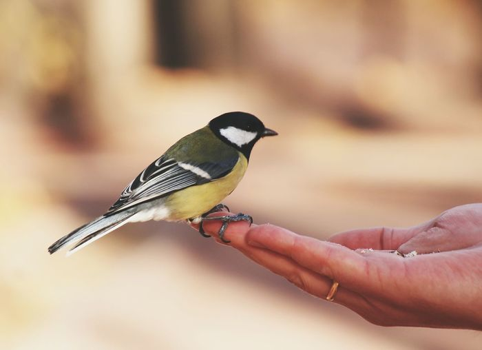 Sparrow on human palm