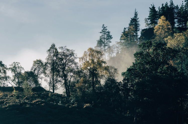 Misty Trossachs morning... Tree Nature Outdoors Beauty In Nature Freshness Foggy Morning Misty Morning Klaquax_Scotland Scotland Travel Destinations Scotlandsbeauty Travel Photography The Week On EyeEm Trossachs National Park