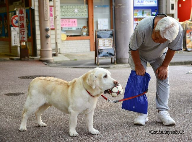 bestfriend Streetphotography EyeEmNewHere Japan Bestfriend Love Labrador Old Age Life Dog Pets One Animal Adult Only Men One Man Only Men