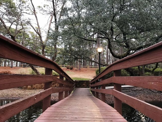 The Wonders A Bridge Can Make Is Amazing To See✨ Tree Nature Outdoors Day No People Bridge - Man Made Structure The Way Forward Footbridge Water Beauty In Nature