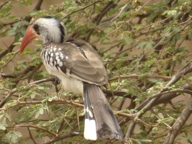 Bandia reserve African Safari Animal Themes Animal Wildlife Animals In The Wild Bandia Reserve Beak Bird Bird Of Prey Day Nature No People One Animal Outdoors Perching Safari
