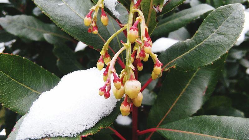 Cold Temperature Leaf Plant Snow Time :)