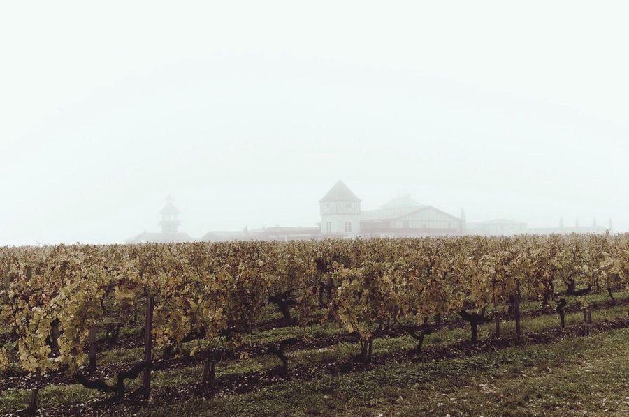 Melancholic Landscapes Wine Fog