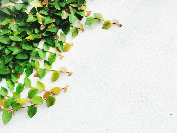 Green leaves on