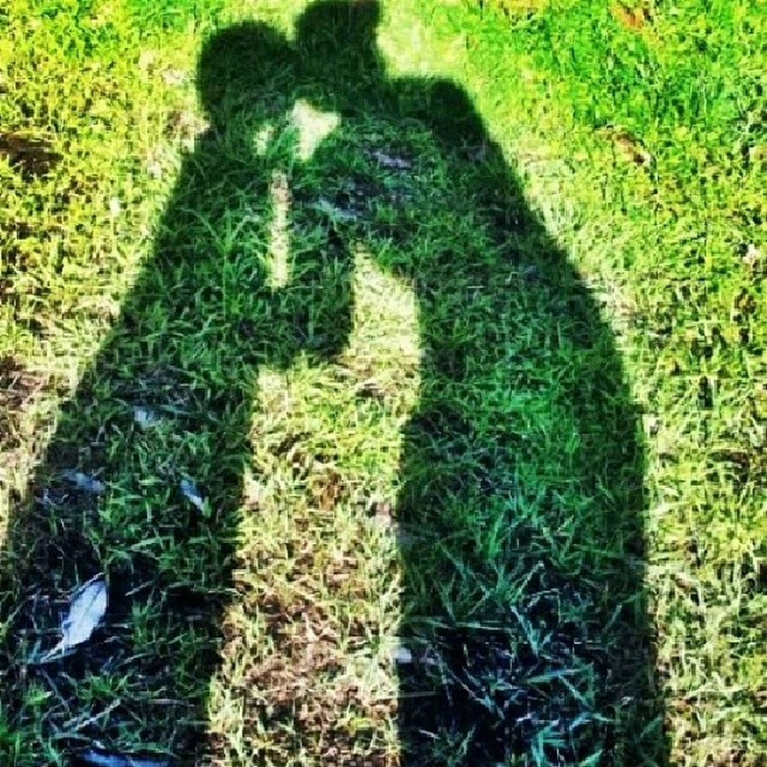 grass, high angle view, shadow, field, focus on shadow, grassy, growth, sunlight, green color, plant, nature, day, lifestyles, outdoors, unrecognizable person, leisure activity, standing, men