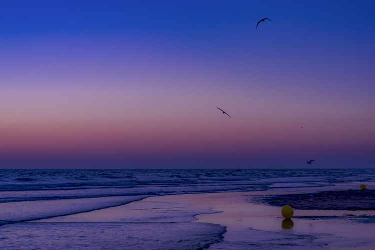 Sea Water Beach Sky Land Sunset Beauty In Nature Nature Bird Vertebrate Scenics - Nature Horizon Over Water Flying Sand Outdoors Animals In The Wild Animal Wildlife My Best Photo 17.62°