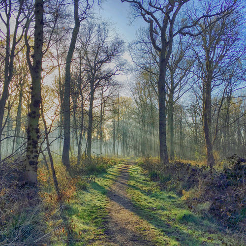 Early morning walk Beauty In Nature Early Morning Nature Outdoors Springtime Sunrise Tranquil Scene Tranquility WoodLand Woodland Walk Woodlands