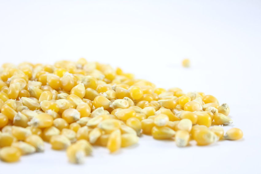Corn kernels for making popcorn on a white background. Corn Kernels For Making Popcorn On A White Background. Close-up Corn Day Food Food And Drink Freshness Healthy Eating No People Studio Shot White Background Yellow