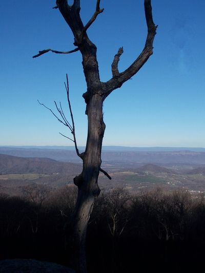 Road Trippin It! Shenandoah National Park Appalachian Mountains Nikon L810 Blue Skies Travel The Wisdom Is In The Trees Not The Glass Windows