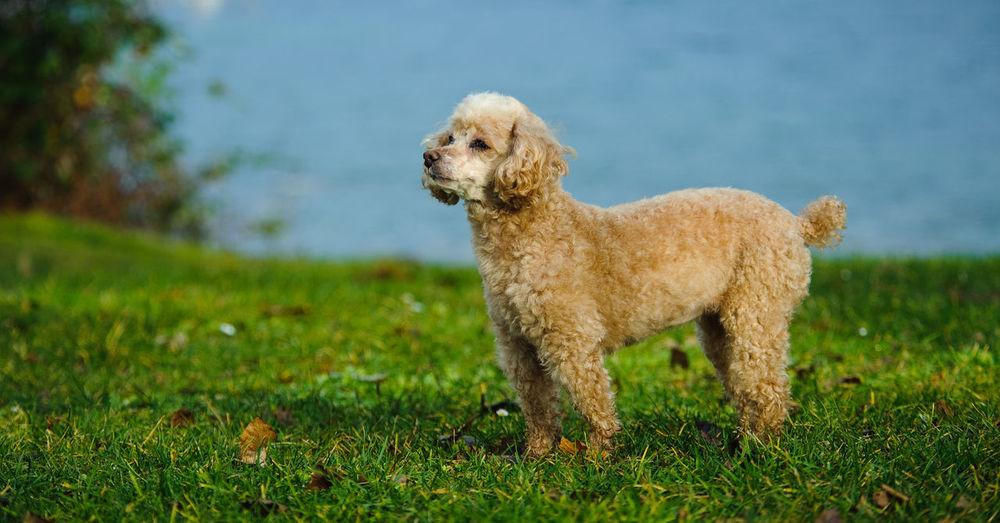 Dog looking away on grassland