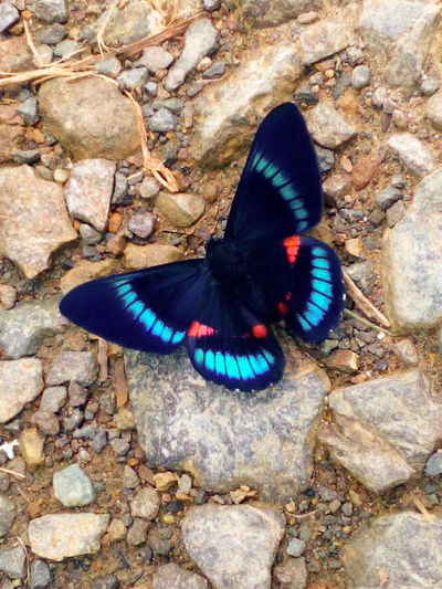 Animals In The Wild Outdoors Butterflies Butterfly Garden Butterfly Wonderland Butterfly In Colombia South America