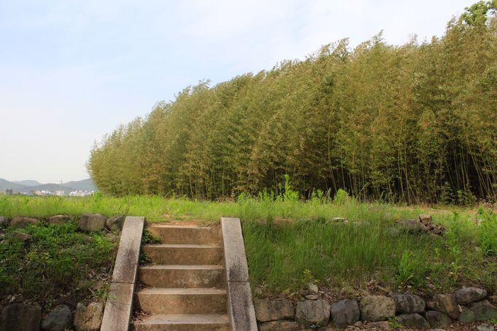 Be. Ready. Grass Field No People Sky Nature Green Color Growth Stair AI Now