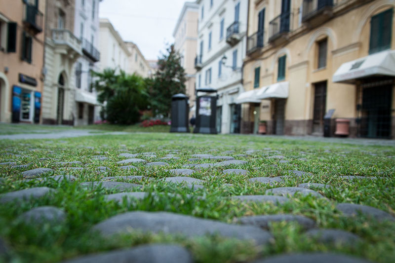 alghero sardegna sardinia Alghero Architecture Building Exterior Built Structure Close-up Day Flower Grass Grass Growth House Nature No People Old Town Outdoors Pavement Patterns Plant Sardegna Selective Focus Selective Focusing First Eyeem Photo